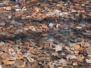 leaves underwater - with polarizerDSCF6021