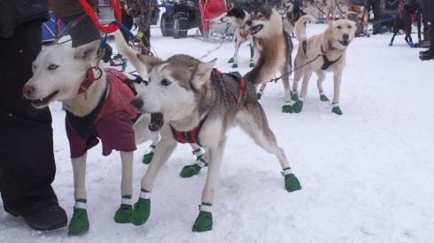 DSCF0768e green boots